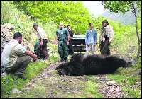 Muerto a tiros un oso en León