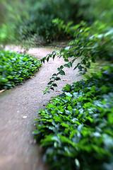 Jardín secreto (IV)