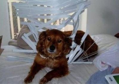 Este perro está acabando con mi paciencia!